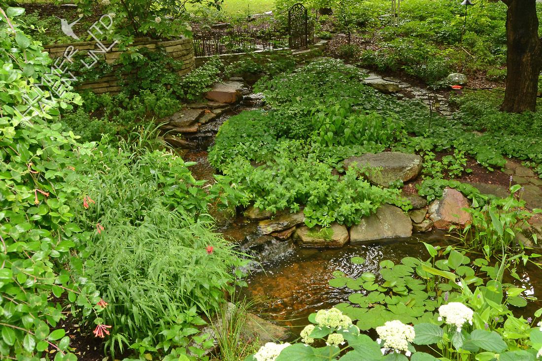 Water Garden 6/17/15