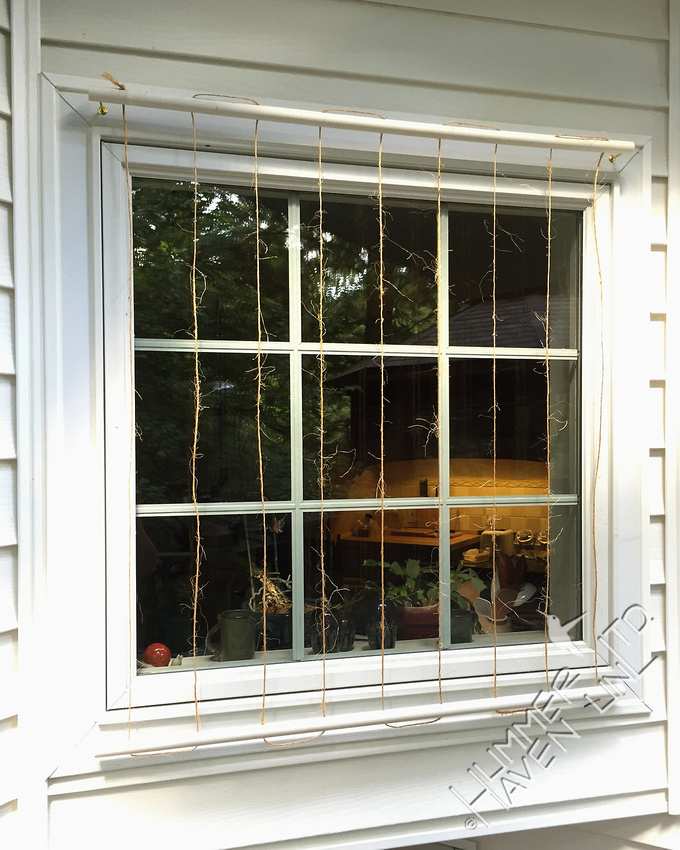 Window protector