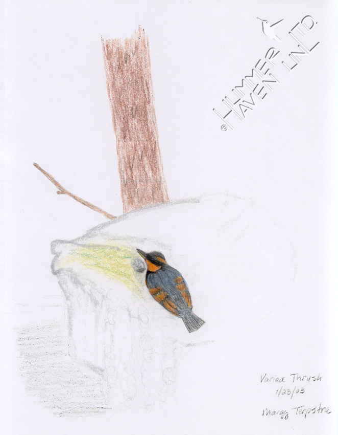 Varied Thrush documentation drawing 1/23/03 for 10th Missouri Record