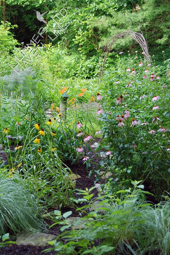 6-13-10 View of Bird and Butterfly Garden