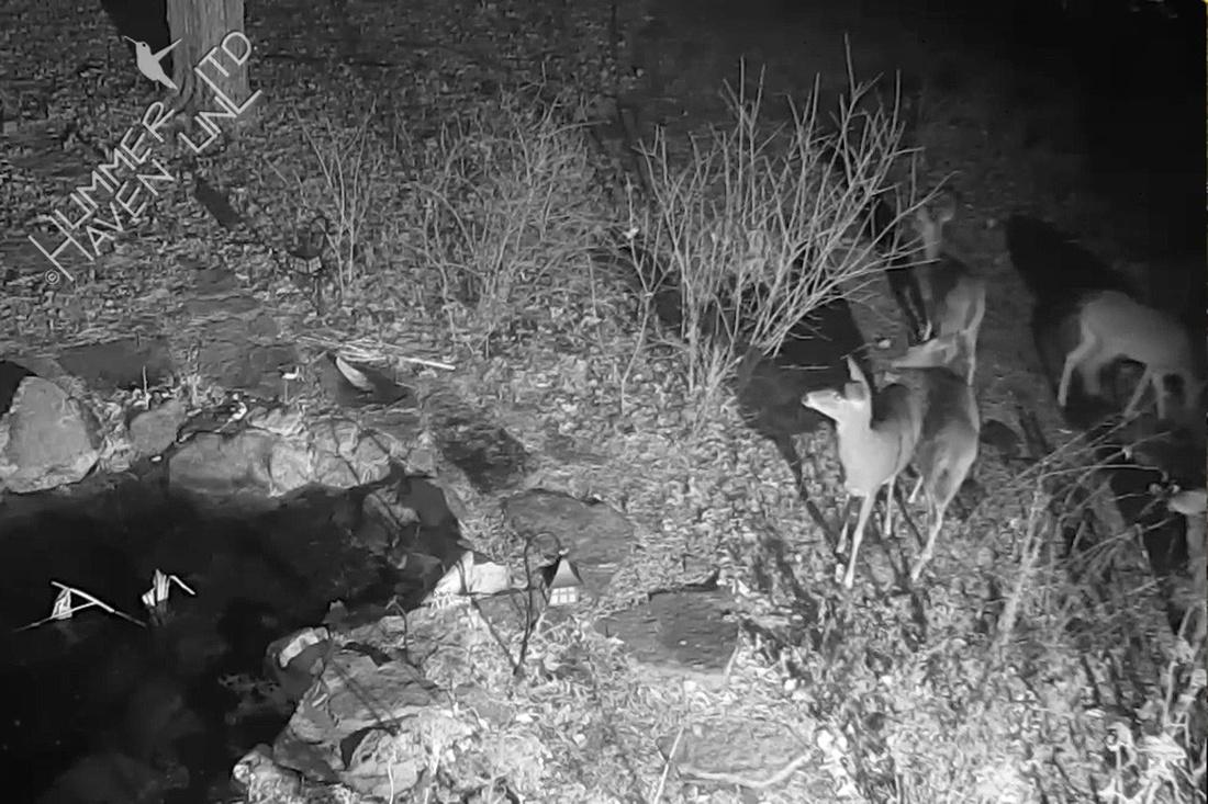 Deer 1-12-17 at 6:31 a.m.