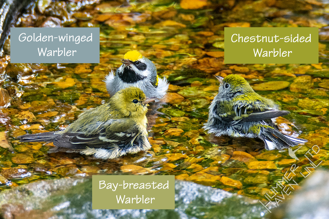 Three Warbler Answers