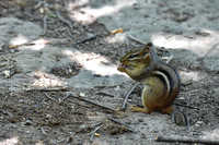 Chipmunk Poley Bubbler Pond 6-19-18