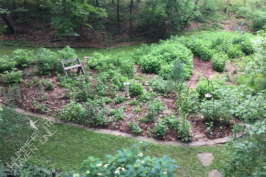 Bird and Butterfly Garden 6-17-19