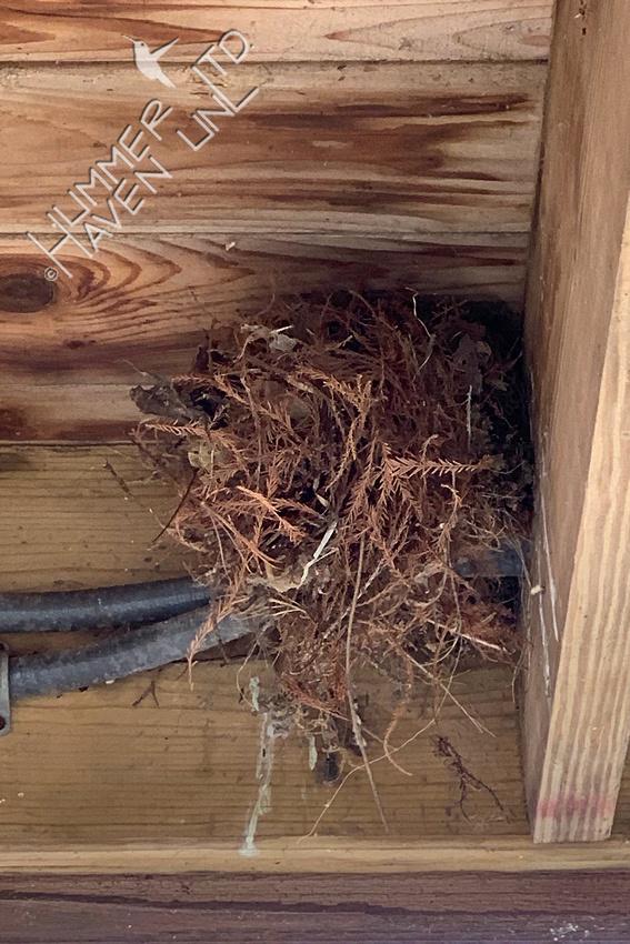 3-8-20 Carolina wren nest atop old Eastern phoebe nest