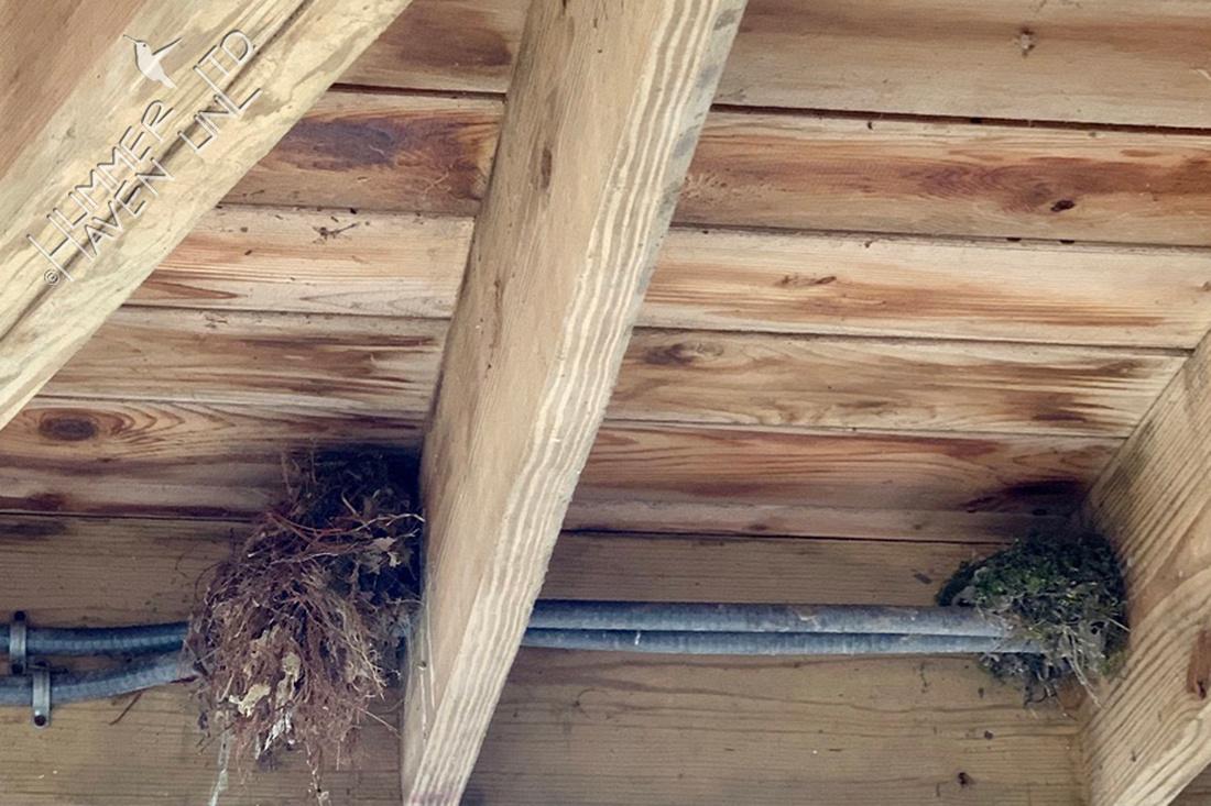 4-3-20 Nests under gazebo