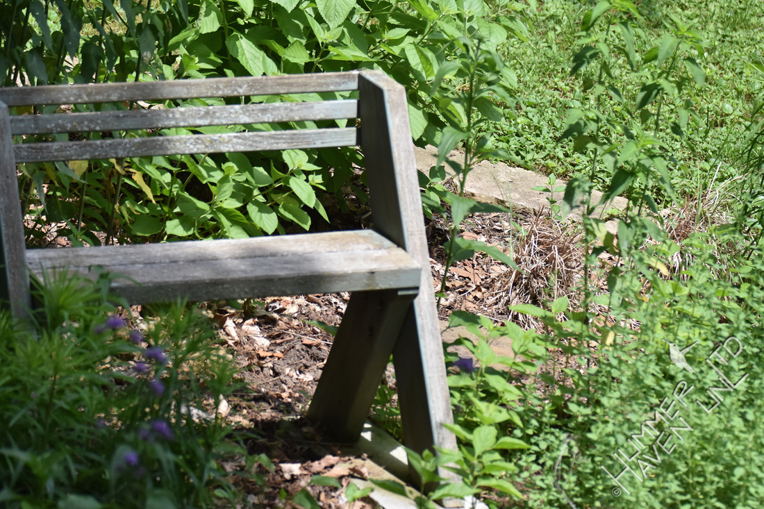 Dust bathing area behind bench 6-4-17