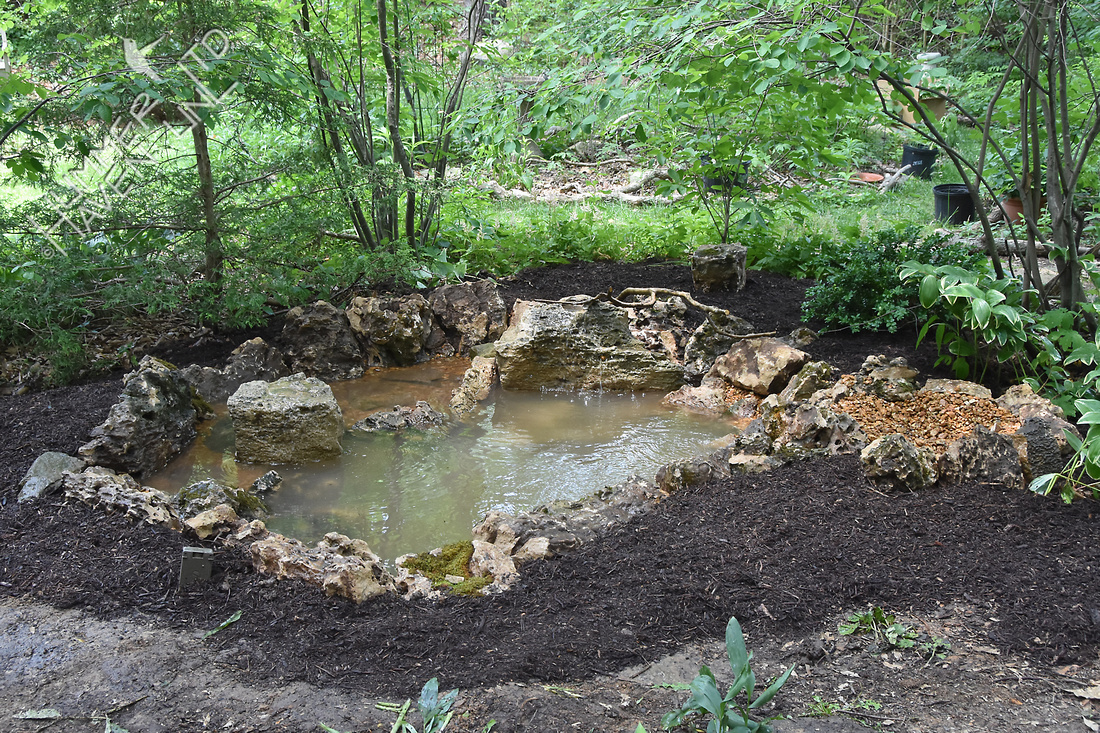 Poley Bubbler Pond 6-11-18