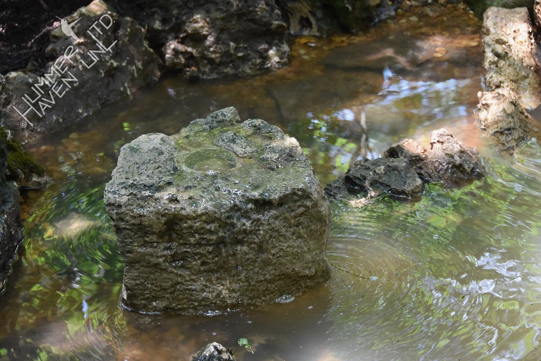 Bubbler Rock #2 Poley Bubbler Pond 6-11-18