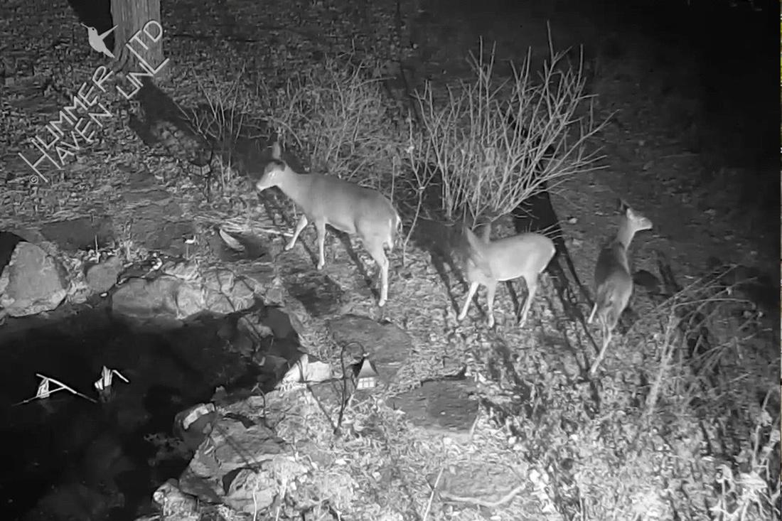 Deer 1-12-17 at 6:32 a.m.