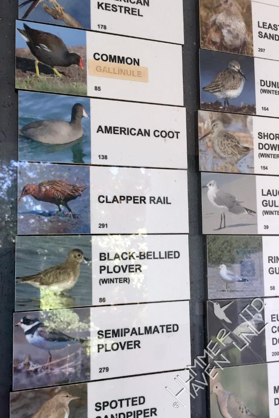 Species Sightings Board at Ding Darling National Wildlife Refuge